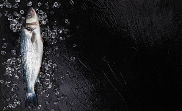 One seabass fish on ice on black stone background, top view stock photo