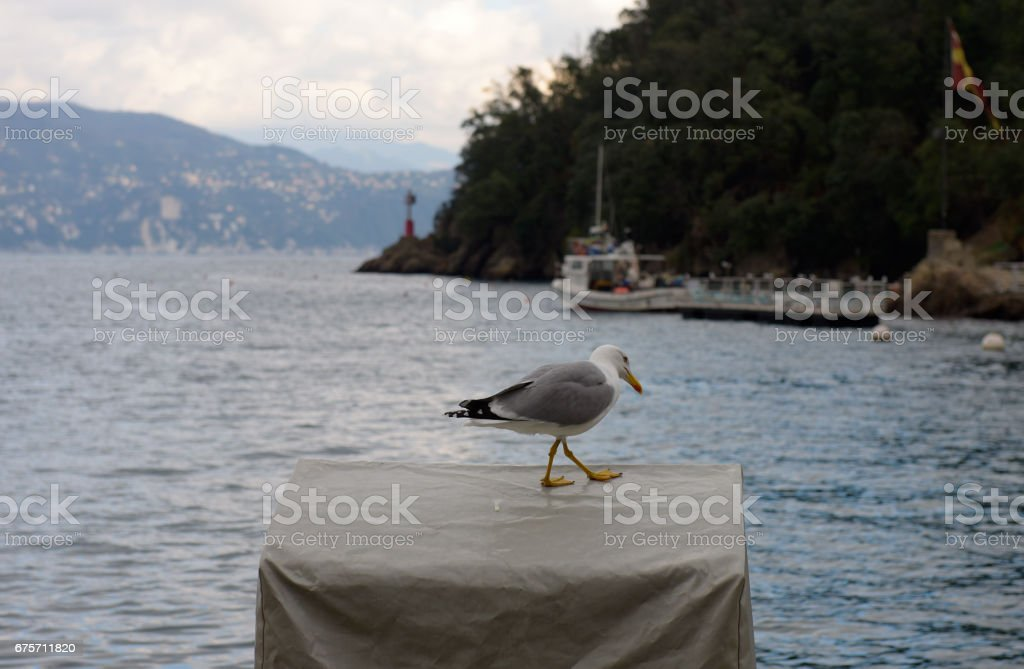 One seagull at Portofino 免版稅 stock photo