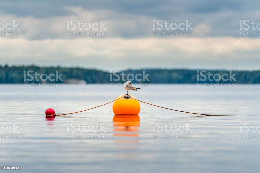 One seagull bird standing resting on an orange buoy on a lake. Calm beautiful seascape view. royalty-free stock photo