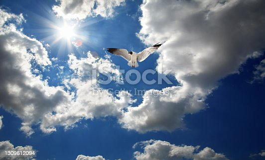 istock One seagull flying over cloudy sky with shinning sun 1309612094
