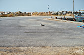 A view of one seagull in the parking lot of a Greek harbor that is looking at the camera.