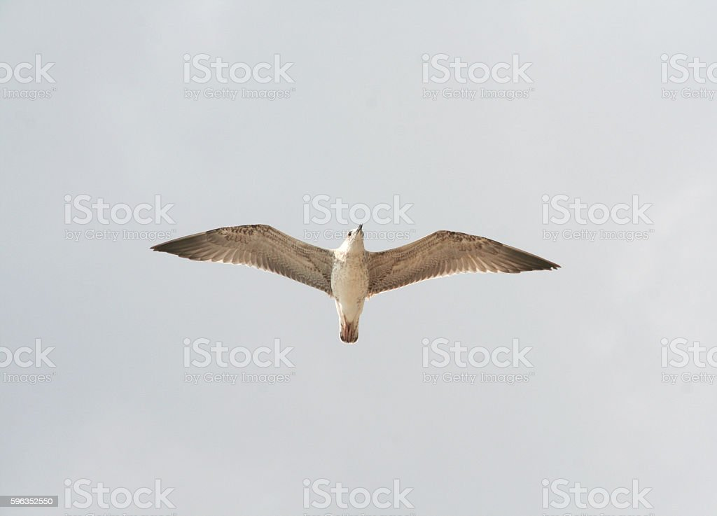 One seagull in the blue sky royalty-free stock photo