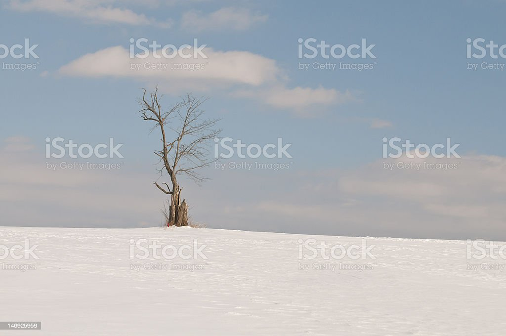One single tree in snow on a sunny day royalty-free stock photo