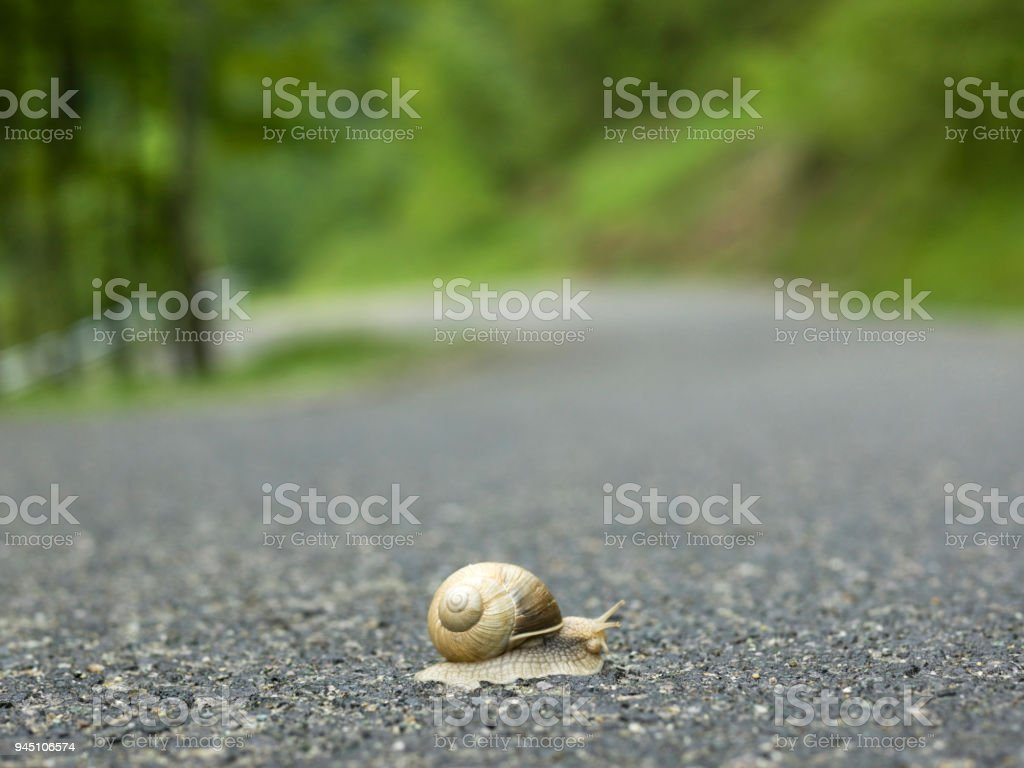 One snail crosses rural road in mountains stock photo