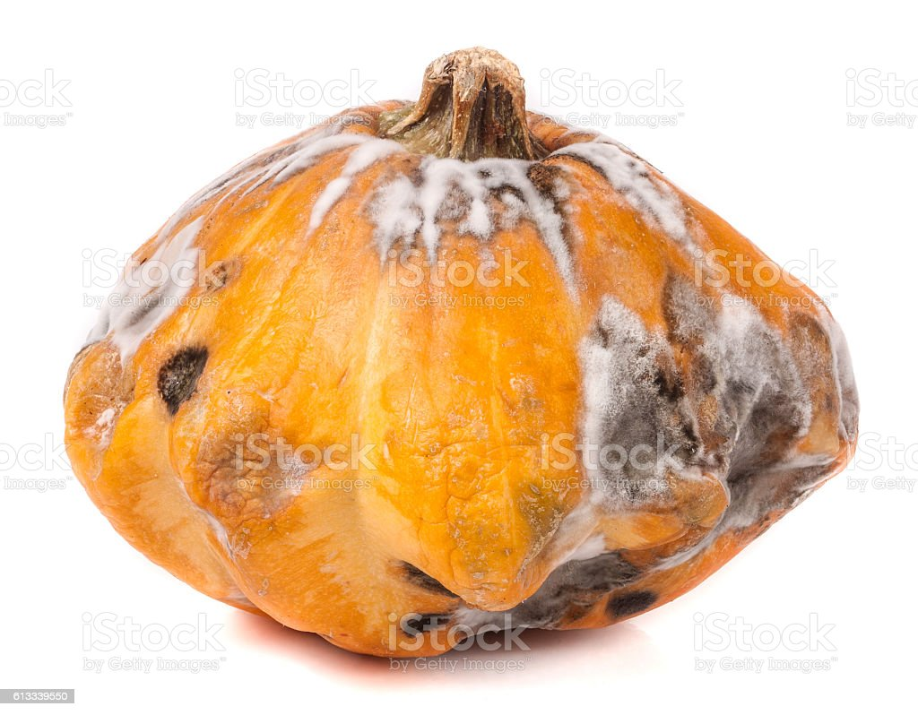 one spoiled pattypan with mold isolated on white background stock photo