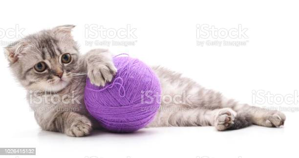 One striped kitten with a ball of yarn picture id1026415132?b=1&k=6&m=1026415132&s=612x612&h=e4n ogbsm51u0nckas79p3ebnduwqrizqb7f6x0dbm4=