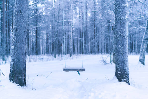 One swing among two trees in forest in winter stock photo