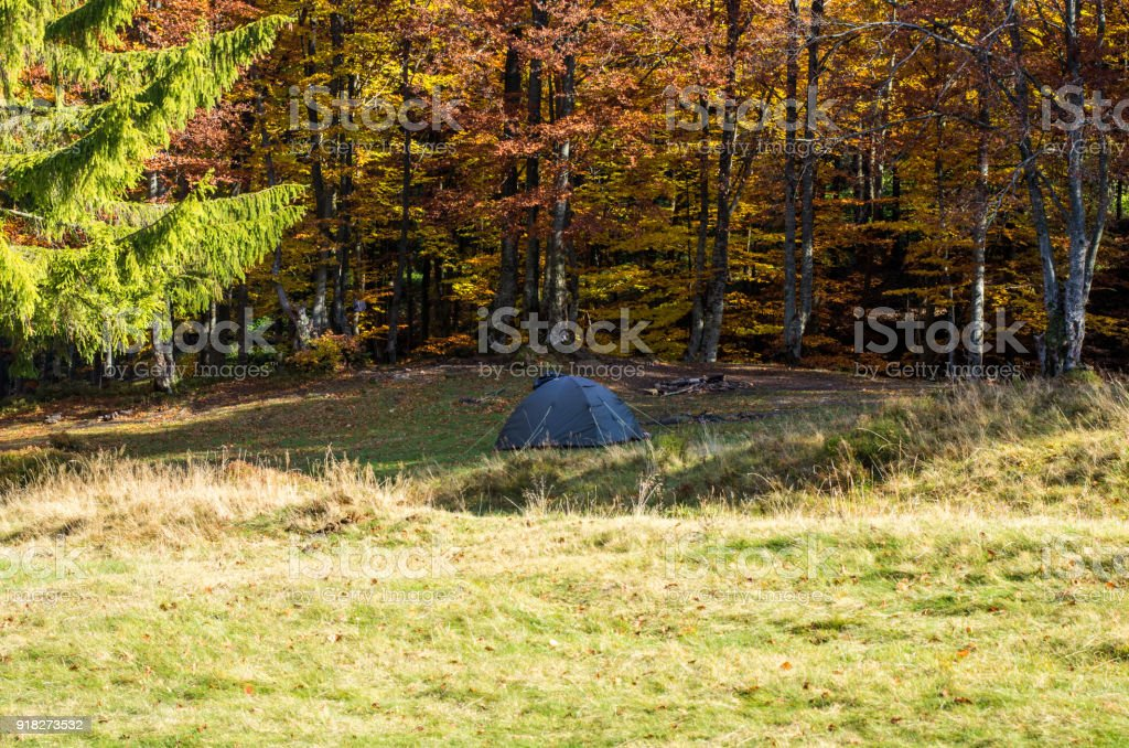 One tourist tent in the forest. Autumn forest. stock photo