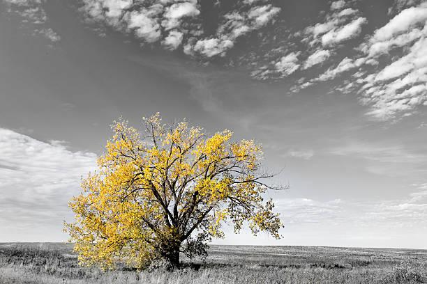 Un albero nel paesaggio rurale - foto stock