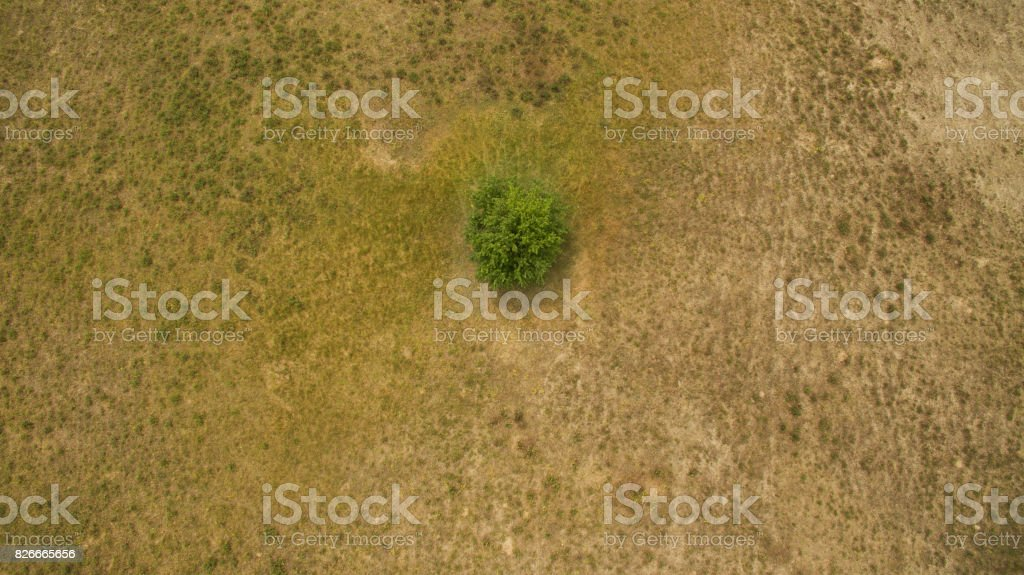 One tree in the field stock photo