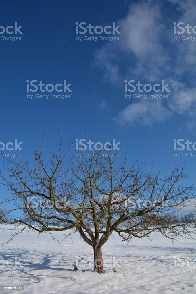 One  tree in the snow with many blue sky stock photo