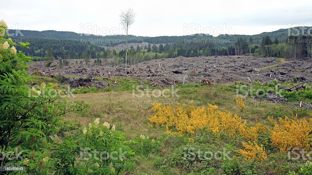 One Tree Left Standing. royalty-free stock photo