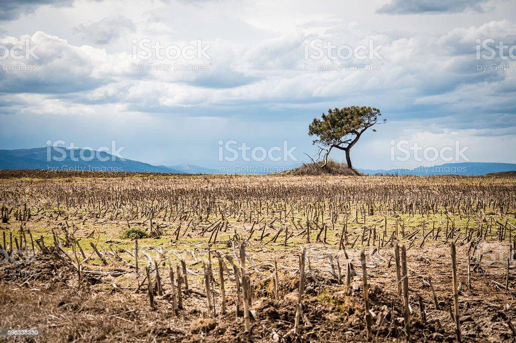 Ein Baum Lizenzfreies stock-foto