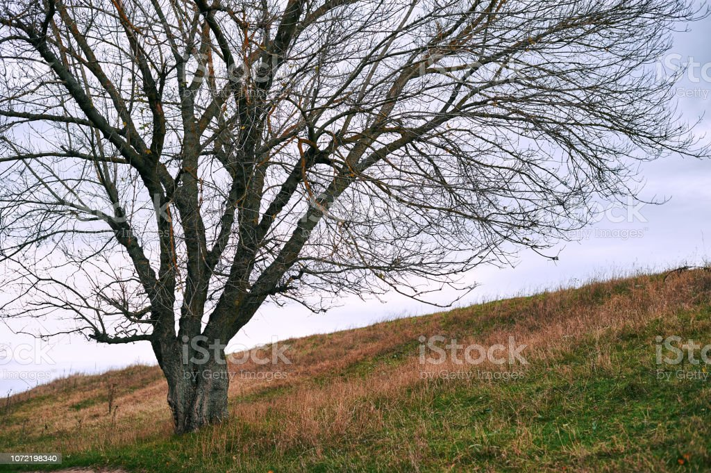 one tree without leaves is on the hill - beautiful autumn landscape...