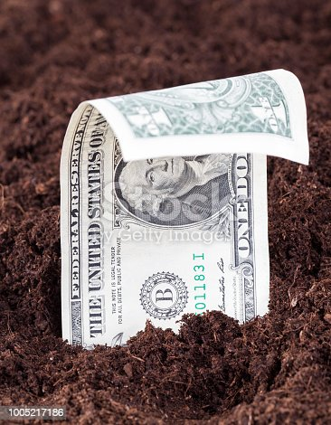 protruding or growing from the soil one US dollar on the field for agricultural crops, a European territory with foreign money