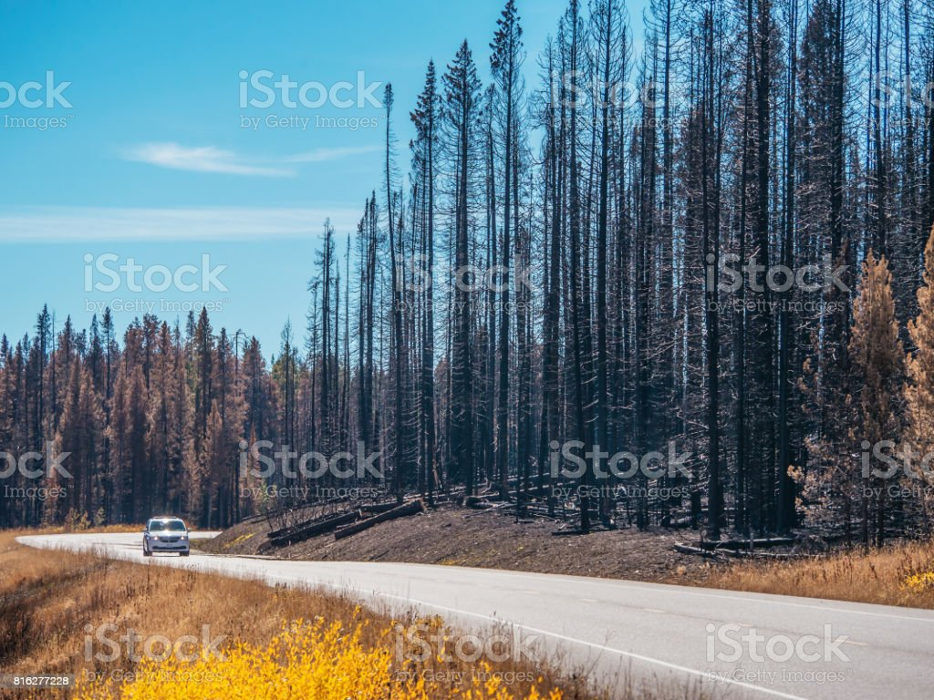 One vehicle driving on highway surrounded by forest destroyed by fire. stock photo