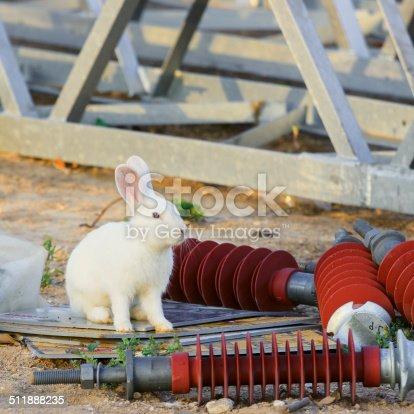 istock One white rabbit is sitting 511888235