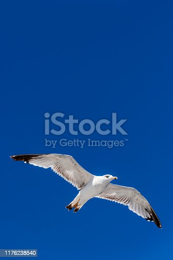 One white seagull is flying in the blue sky in Greece.