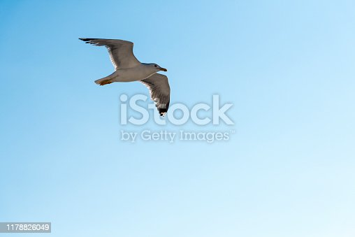 One white seagull is flying in the blue sky in Greece