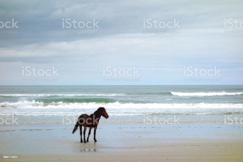 One wild horse 免版稅 stock photo