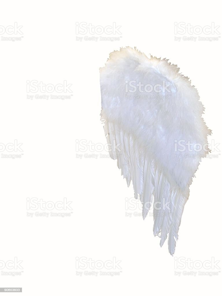 One wing royalty-free stock photo