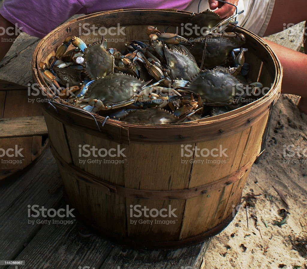 One wooden basket full of blue crabs stock photo
