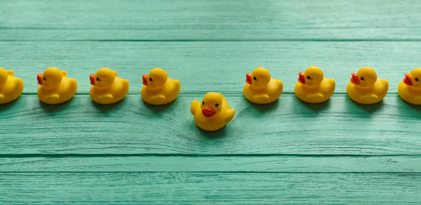 one yellow rubber duck breaking away from a line of orderly yellow rubber ducks moving in a straight direction on a turquoise colored wooden table background. - ordine foto e immagini stock