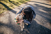 One young teenage girl playing with her retriever in public park on beautiful autumn day