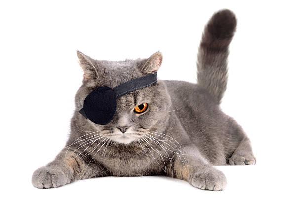 Oneeyed cat picture id466144069?b=1&k=6&m=466144069&s=612x612&w=0&h=j5sejmt8ry0iooge2nc2l8vyrqlbwnkcy7hdhztymea=