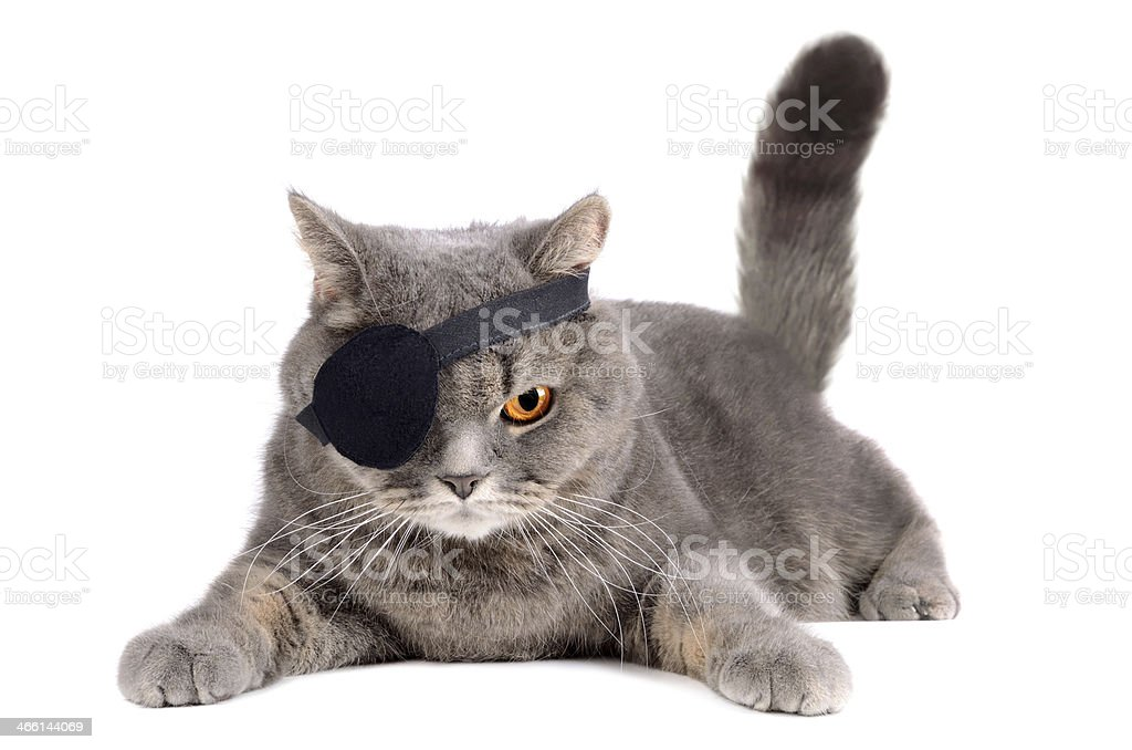 One-eyed cat stock photo