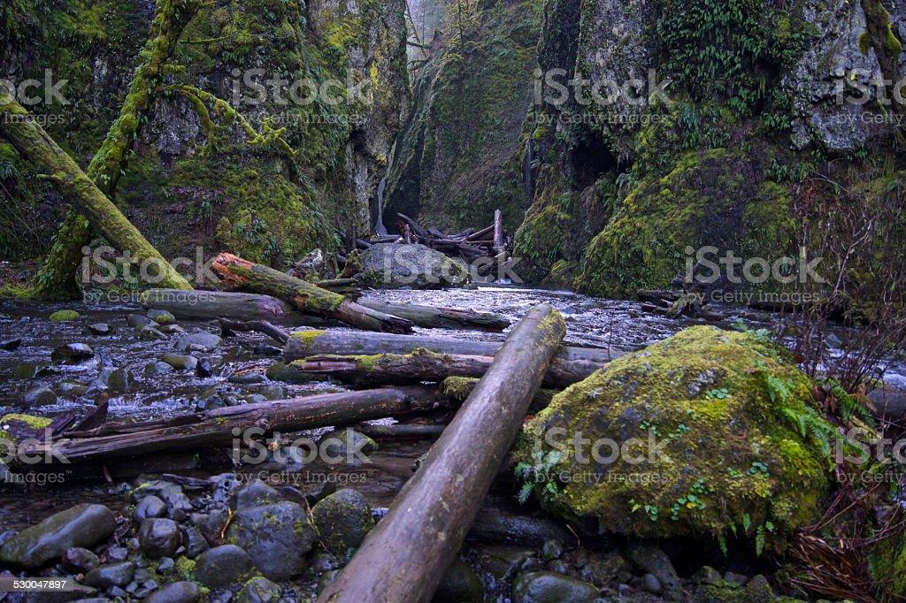 Oneonta Gorge stock photo