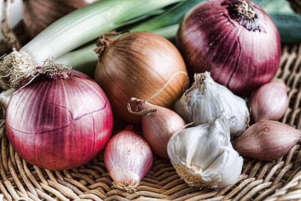 onion family - garlic stock photos and pictures