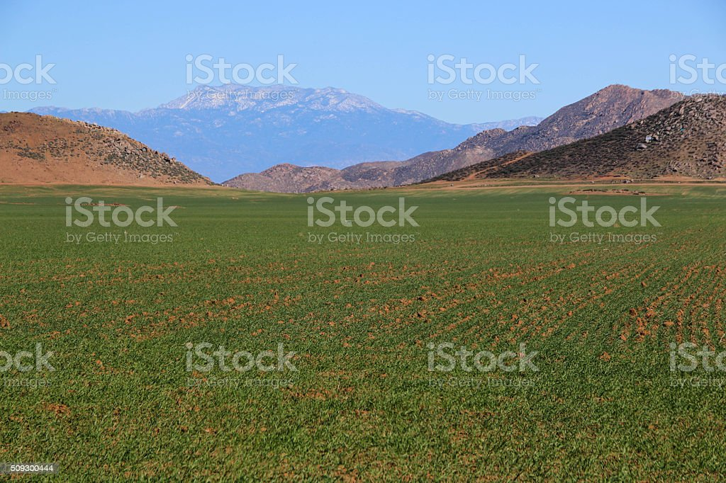 Onion Fields and Mountains stock photo