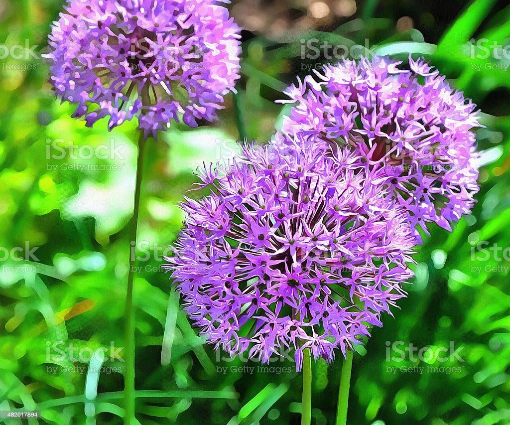 Onion Flower 1 stock photo
