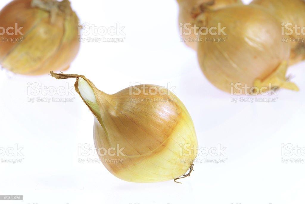 onion Isoliert Lizenzfreies stock-foto