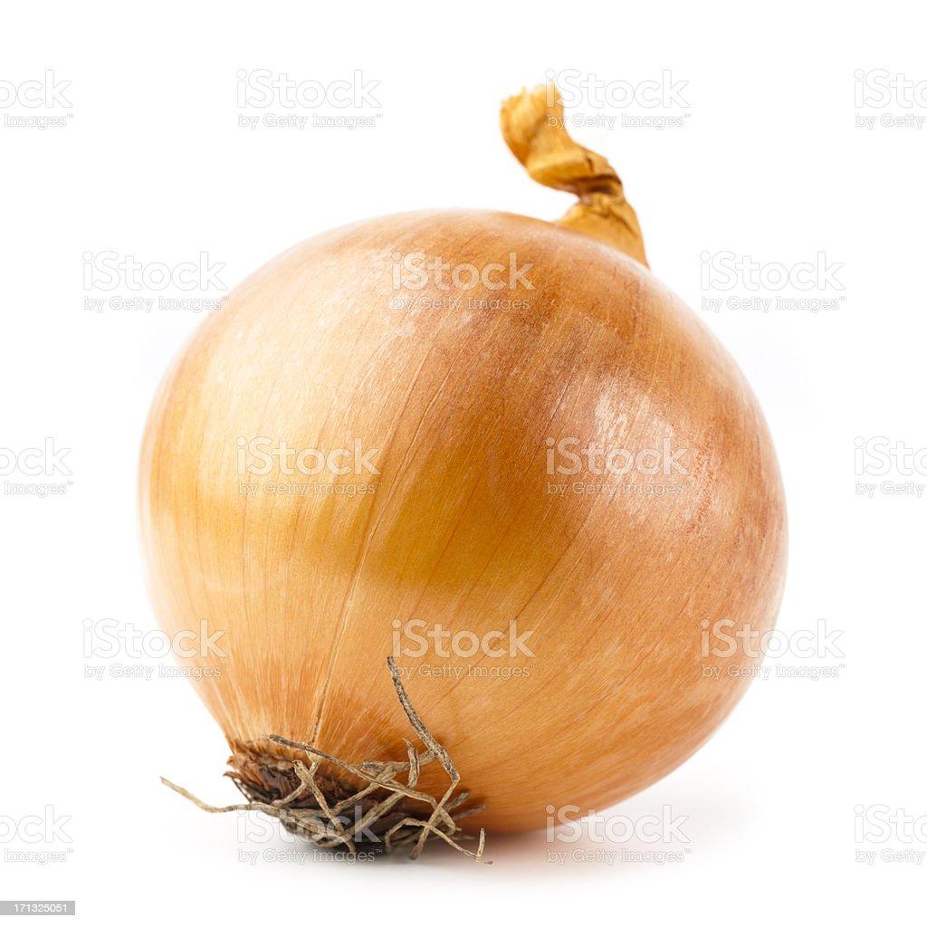 onion stock photo