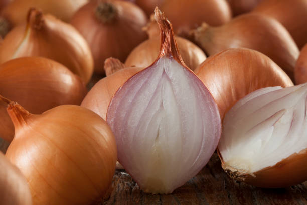 Onion Family Stock Photos Pictures Royalty Free Images Istock