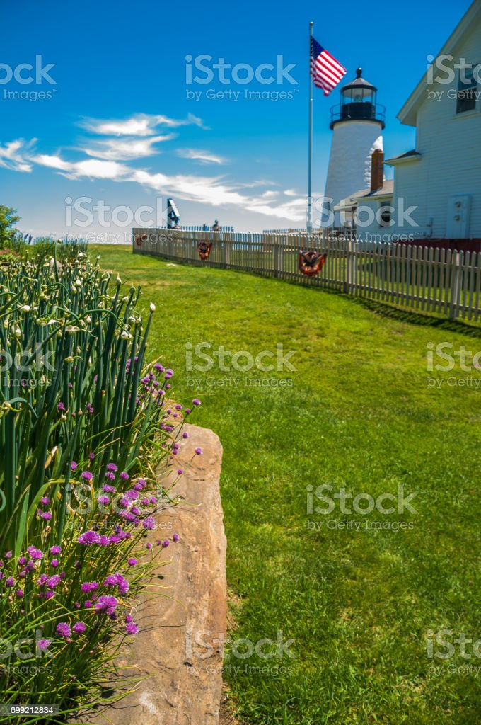 Onions and Chives stock photo