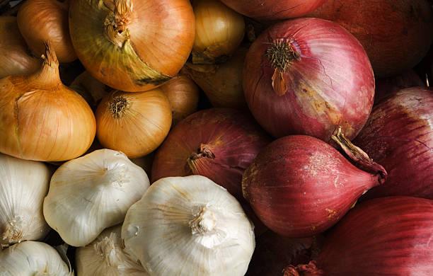 cipolle e garlics varietà di coltivazione cipolla verdure famiglia - aglio alliacee foto e immagini stock