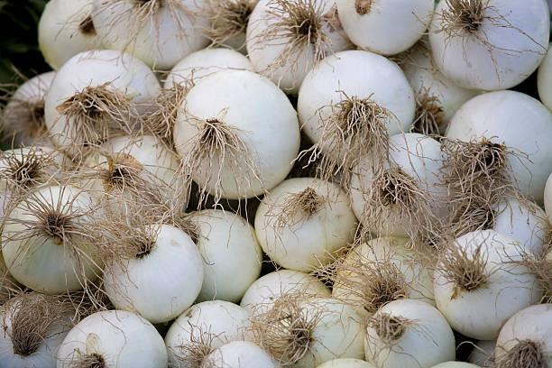 zwiebeln auf einem bauernmarkt - perlzwiebeln stock-fotos und bilder