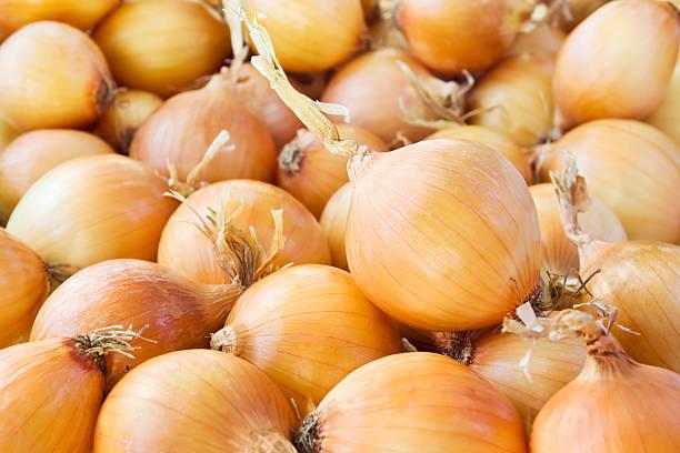 onions - 洋蔥 個照片及圖片檔