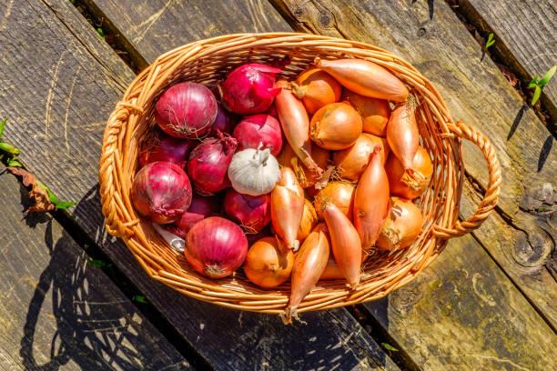 uien, sjalotten en knoflook in een rieten mand - sjalot stockfoto's en -beelden