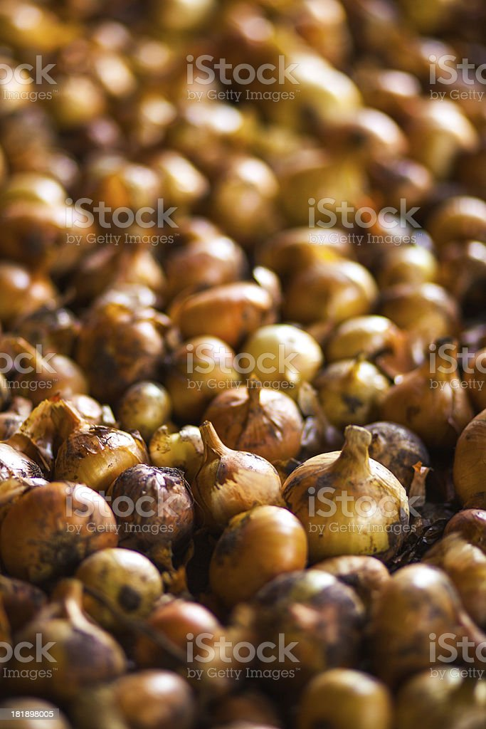 Onios royalty-free stock photo