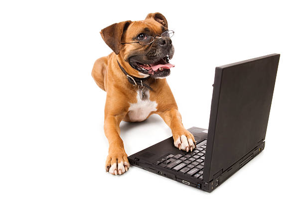 Online Canine - Dog with Laptop stock photo