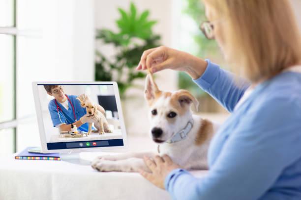 Online consultation with veterinarian doctor picture id1224301937?b=1&k=6&m=1224301937&s=612x612&w=0&h=fjngk 53ulrwvjzpzyorplq9cd3t ion0wajszwr1ge=