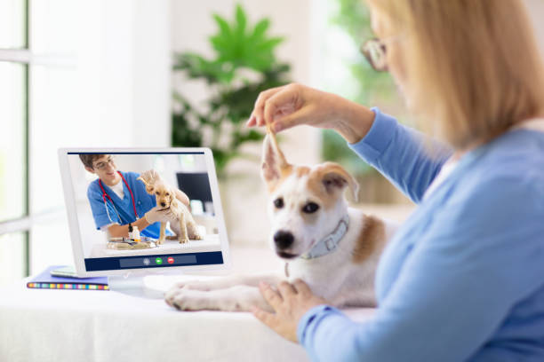 Online consultation with veterinarian doctor. stock photo