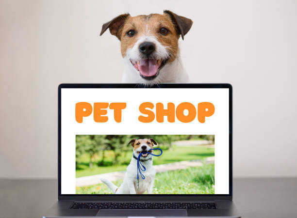 online shopping via internet concept with dog sitting behind notebook inviting into pet shop - pet shop and dogs not cats stock pictures, royalty-free photos & images