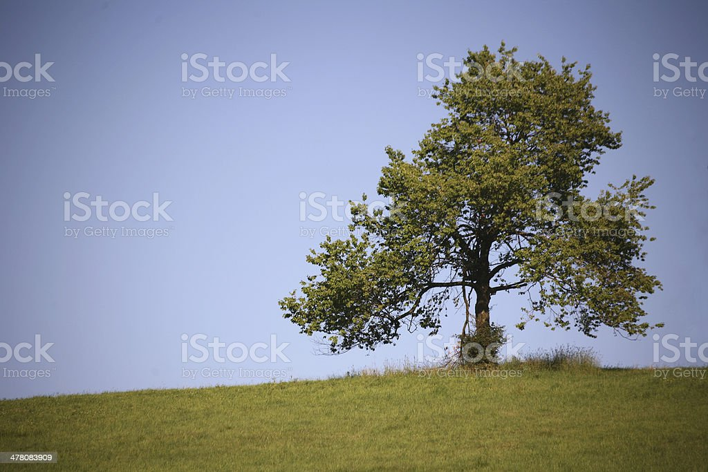Only a tree stock photo