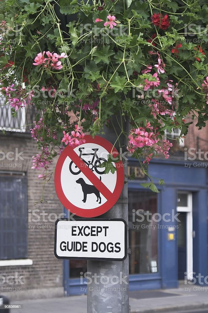 Only guide dogs in Dublin royalty-free stock photo