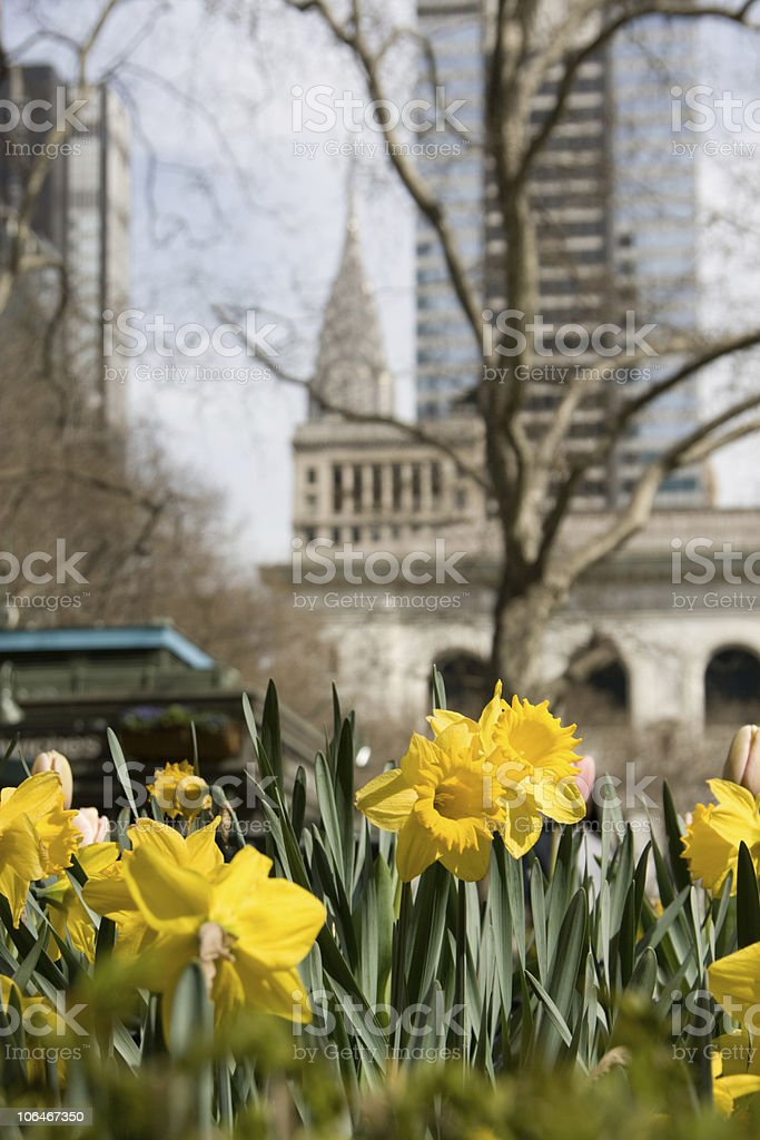 Onset of Spring - Flowers and urban landscape stock photo